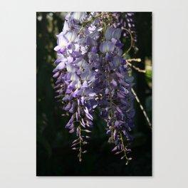 Wisteria With Garden Background Canvas Print