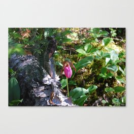 Pink Lady Slipper Canvas Print