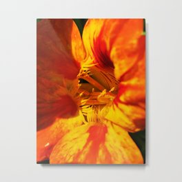 Orange Zest Metal Print