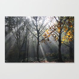 Autumn Sunbeams Canvas Print