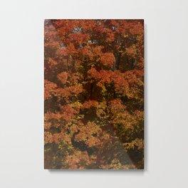 Autumn in Canada Metal Print