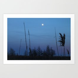 Cattus Island At Dusk, 2017 Art Print