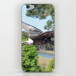 Rüppells Vulture iPhone Skin