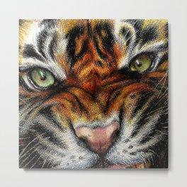 Beautiful face of big cat. Metal Print