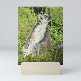 Ring-tailed Lemur Mini Art Print