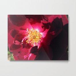 Insides of a Rose Metal Print
