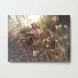 Withered Lace Metal Print