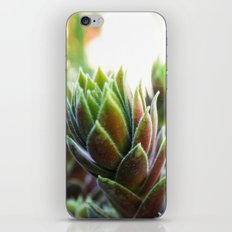 Tropical Colors iPhone & iPod Skin