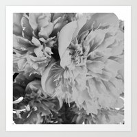 Peonies in Black and White Art Print