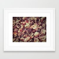 shells Framed Art Prints featuring Shells by HooVeHee