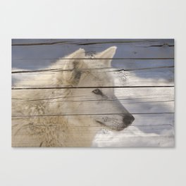 Aries the White Wolf Portrait on Faux Weathered Wood Texture Canvas Print