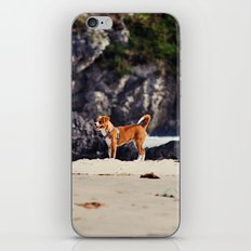 Dog at the beach iPhone & iPod Skin