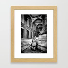 Mosque Cat Framed Art Print