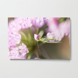 Green Lacewing on Allium - Onion Flower 1 Metal Print