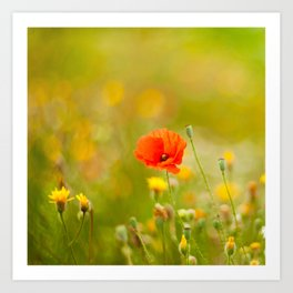 poppy flower in a field in summer Art Print