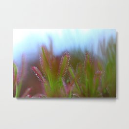 Fairy Like Sundew - JUSTART © Metal Print