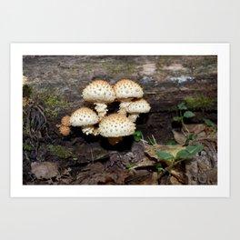 Honey Mushroom Cluster Art Print