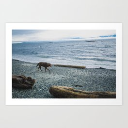 Pup on a beach Art Print