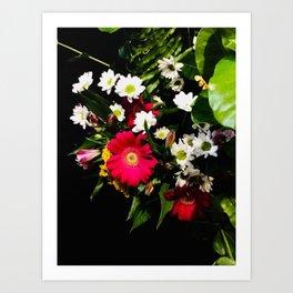Spring Time Daisies Art Print