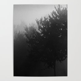 Trees in the Mist (1) Poster