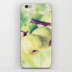 Juicy Snack iPhone & iPod Skin