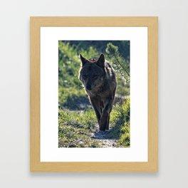 Wolf in the mist Framed Art Print