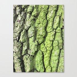 Green Woodwork Canvas Print