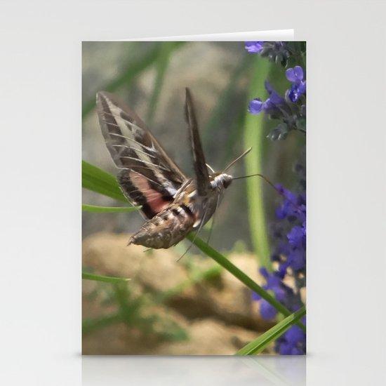 Hummingbird Moth Stationery Cards