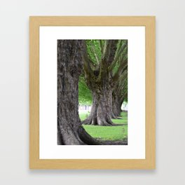 Cambridge tree 2 Framed Art Print