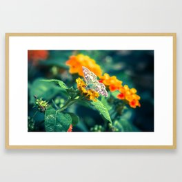 A Taste of the Sun Framed Art Print