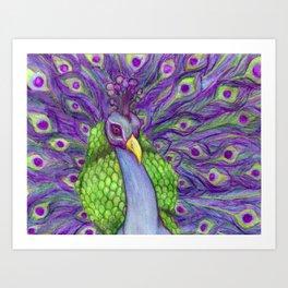 Vibrant Majestic Peacock  Art Print