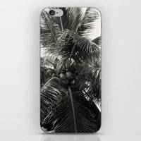 coconut wishes iPhone & iPod Skins featuring Coconut! by Chandon Photography