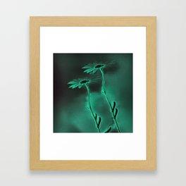 two green daisies Framed Art Print