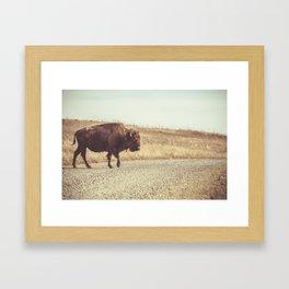 Bison Xing Buffalo Crossing Framed Art Print