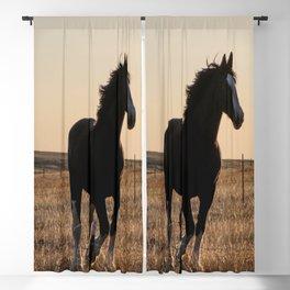Freya Blackout Curtain