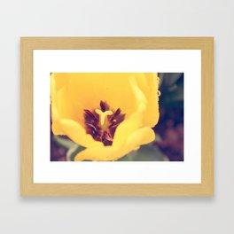Tulip 3 Framed Art Print