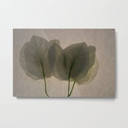 white transparent leaves photography Metal Print