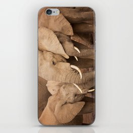 Herd of elephants in Addo Elephant National Park, South Africa iPhone Skin