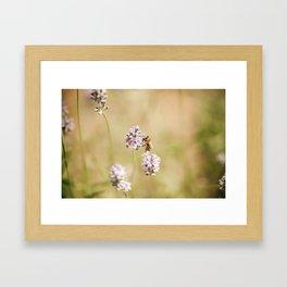little bee Framed Art Print