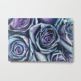 Macro photography of purple - neon roses with raindrops. Fantasy and magic concept. Selective focus. Metal Print