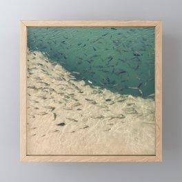 Fish in a Wild River  Framed Mini Art Print