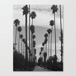 Vintage Black & White California Palm Trees Photo Canvas Print