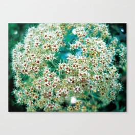 Growing in the Astro plane  Canvas Print