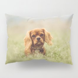 Cute Puppy - Little Dog Pillow Sham