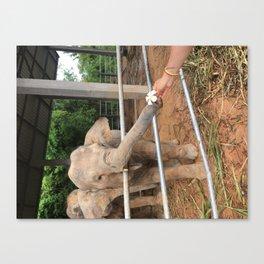 Thailand Rescue Elephant & Flower Canvas Print