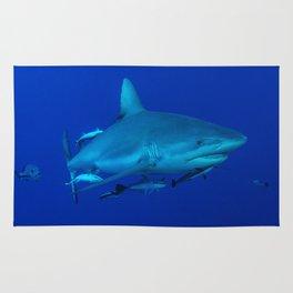Grey Reef Shark on the Great Barrier Reef Rug