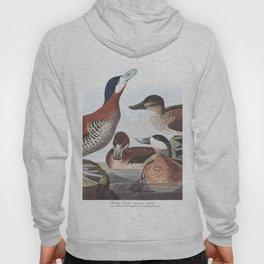 Ruddy duck, Birds of America, Audubon Plate 343 Hoody