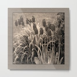old timey tulips (square) Metal Print