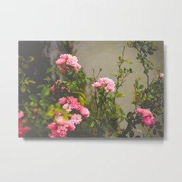 Flower XVI Metal Print