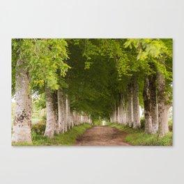 Treeparade Canvas Print
